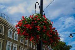 De Bloemen van Londen royalty-vrije stock afbeeldingen