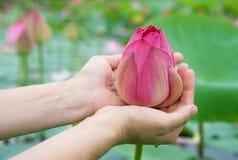 De bloemen van Lotus Stock Afbeeldingen