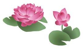 De bloemen van Lotus Stock Afbeelding