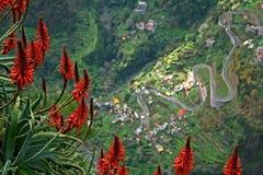 De bloemen van madera met weg bij bodem van clif Royalty-vrije Stock Foto's