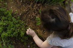 De bloemen van meisjeoogsten royalty-vrije stock foto