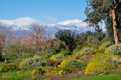 De bloemen van Mountian Royalty-vrije Stock Foto's