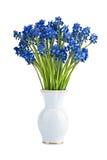 De bloemen van Muscari in vaas Royalty-vrije Stock Afbeeldingen