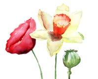 De bloemen van narcissen en van de Papaver Royalty-vrije Stock Afbeelding
