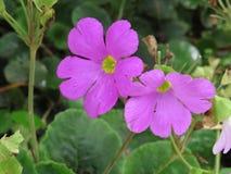 De bloemen van Nice royalty-vrije stock fotografie