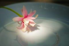 De bloemen van Nice op ceramische schotel in aardlicht Stock Afbeeldingen