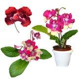 De bloemen van orchideeën het is geïsoleerdi Stock Afbeeldingen