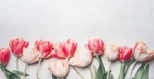 De bloemen van pastelkleurtulpen met waterdalingen, hoogste mening, grens Lay-out of de lentegroetkaart stock afbeeldingen