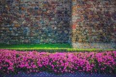 De bloemen van de petunia in volledige bloei Stock Foto