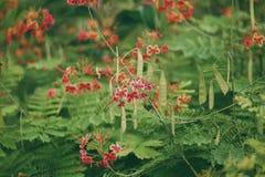 De bloemen van Phoenix Royalty-vrije Stock Foto