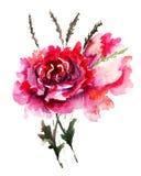 De bloemen van pioenen Stock Fotografie