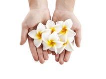 De bloemen van Plumerias Royalty-vrije Stock Afbeeldingen