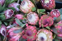 De bloemen van Protea op de markt van een landbouwer Stock Fotografie