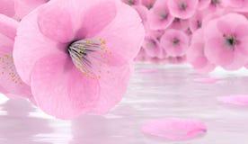 De bloemen van Sakura 3d kersen de bloesem geeft terug Stock Afbeelding