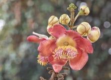 De bloemen van Sala Royalty-vrije Stock Afbeeldingen