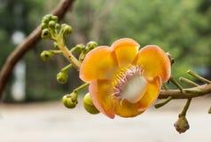 De bloemen van Salavan Stock Fotografie
