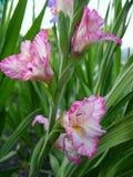 De Bloemen van schoonheid Royalty-vrije Stock Foto's
