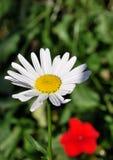 De bloemen van september royalty-vrije stock afbeelding