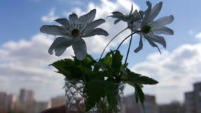 De bloemen van de sneeuwklokjelente Sneeuwklokjes tegen de blauwe hemel Sneeuwklokjesclose-up Een klein boeket van sneeuwklokjes stock foto