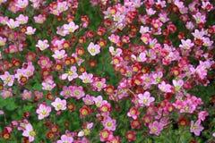 De bloemen van de tuin royalty-vrije stock afbeeldingen