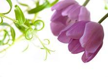 De bloemen van tulpen Royalty-vrije Stock Afbeelding