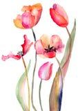 De bloemen van tulpen Stock Afbeelding