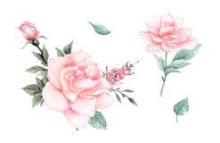De bloemen van de waterverf bloemenillustratie, Blad en knoppen Botanische samenstelling voor huwelijk of groetkaart Stock Afbeelding