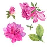 De bloemen van de waterverf Heldere Roze Azalea's Royalty-vrije Stock Afbeelding