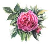 De bloemen van de waterverf De hond nam toe Royalty-vrije Stock Afbeelding