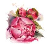 De bloemen van de waterverf peonies Royalty-vrije Stock Foto's