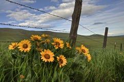 De Bloemen van Wilde Westennen stock foto