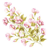 De bloemen van wildernis namen toe De illustratie van de waterverf Royalty-vrije Stock Foto's