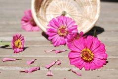 De bloemen van Zinnia op een houten achtergrond Stock Afbeeldingen