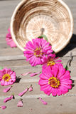 De bloemen van Zinnia op een houten achtergrond Stock Foto
