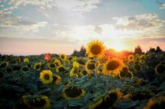 De bloemen van de zomer Zonsondergang in de tuin royalty-vrije stock foto