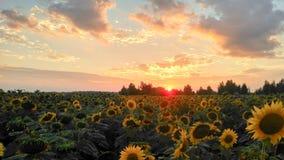 De bloemen van de zomer Zonsondergang in de tuin stock afbeelding
