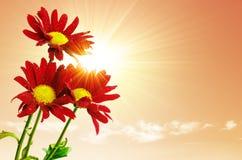 De Bloemen van zonnestralen stock foto's