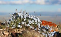 De bloemen vergeten me nota stock fotografie