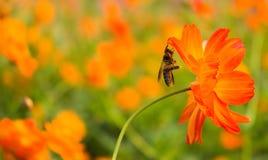 De bloemen worden bestoven door bijen Stock Afbeelding