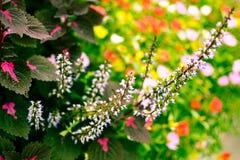 De bloemen worden opgenomen in de bloemtuin Royalty-vrije Stock Afbeeldingen