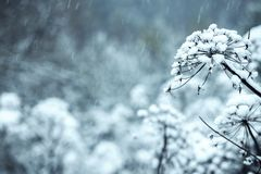 De bloemen zijn behandeld met ijs, sneeuw stock foto