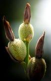 De bloemen zijn bloeiend Stock Afbeelding