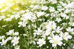 De bloemen zijn in de stralen van licht Royalty-vrije Stock Afbeeldingen
