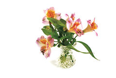 De bloemen zijn in een vaas Royalty-vrije Stock Foto