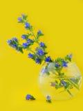 De bloemen zijn het gebied in een ronde vaas. Royalty-vrije Stock Afbeeldingen