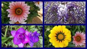De bloemen zijn het teken van de lente stock videobeelden