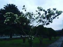 De bloemen zijn mooi Stock Foto