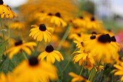 de bloemen zijn mooi Stock Foto's