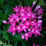 De bloemen zijn mooi zullen royalty-vrije stock fotografie
