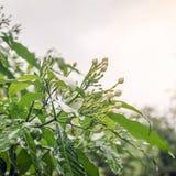 De bloemen zijn nat en de regendalingen royalty-vrije stock foto's